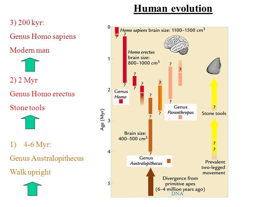 Human evolution 1)4-6 Myr: Genus Australopithecus Walk upright 2) 2 Myr Genus Homo erectus Stone tools 3) 200 kyr: Genus Homo sapiens Modern man DNA
