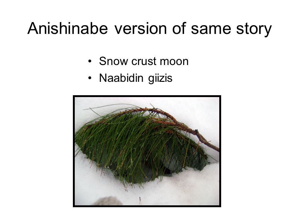 Anishinabe version of same story Snow crust moon Naabidin giizis