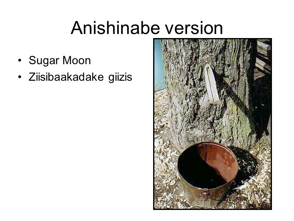 Anishinabe version Sugar Moon Ziisibaakadake giizis