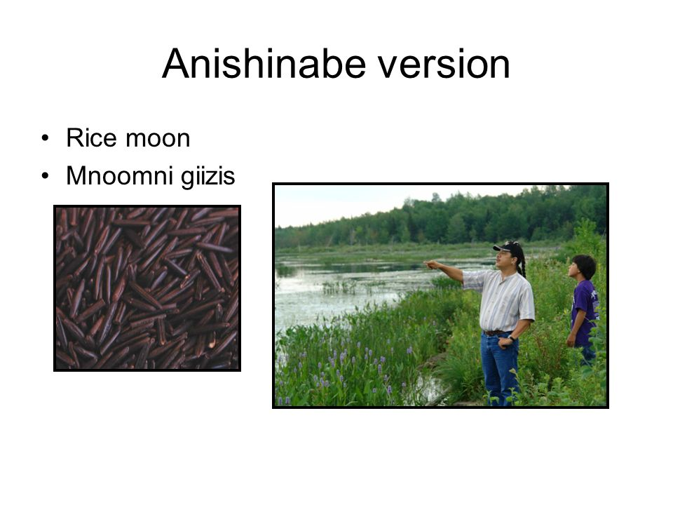 Anishinabe version Rice moon Mnoomni giizis