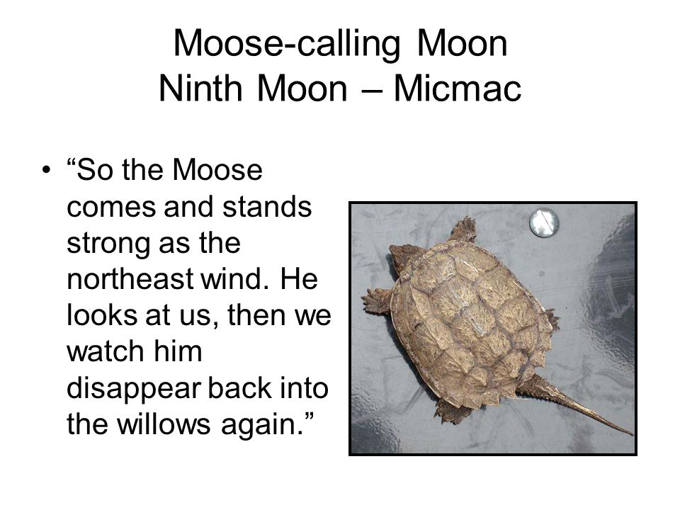 Moose-calling Moon Ninth Moon – Micmac So the Moose comes and stands strong as the northeast wind.