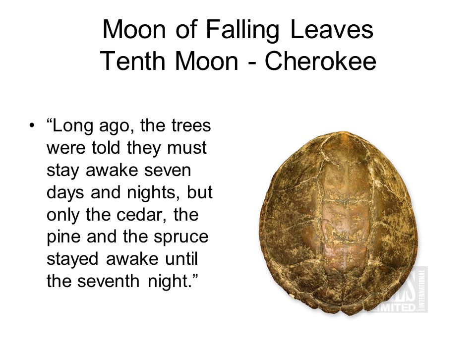 Moon of Falling Leaves Tenth Moon - Cherokee Long ago, the trees were told they must stay awake seven days and nights, but only the cedar, the pine and the spruce stayed awake until the seventh night.
