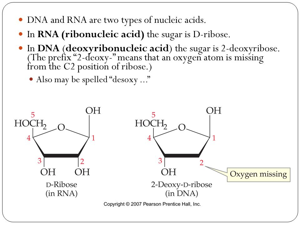 DNA and RNA are two types of nucleic acids. In RNA (ribonucleic acid) the sugar is D-ribose. In DNA (deoxyribonucleic acid) the sugar is 2-deoxyribose