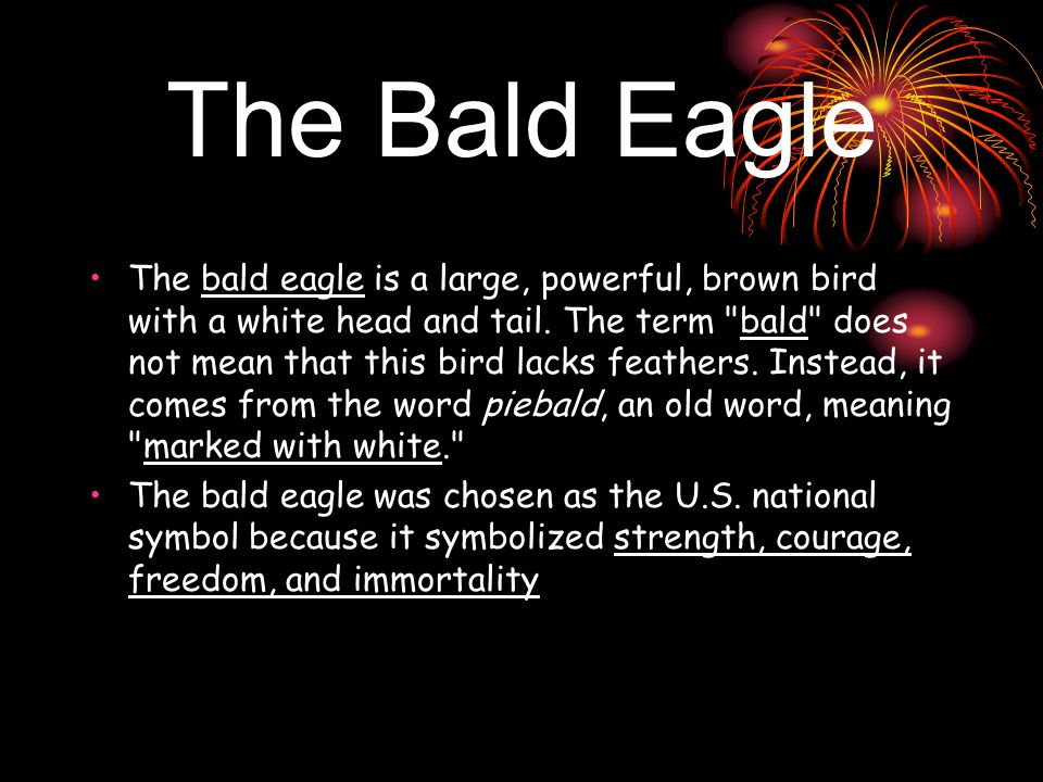 The Bald Eagle The bald eagle is a large, powerful, brown bird with a white head and tail.