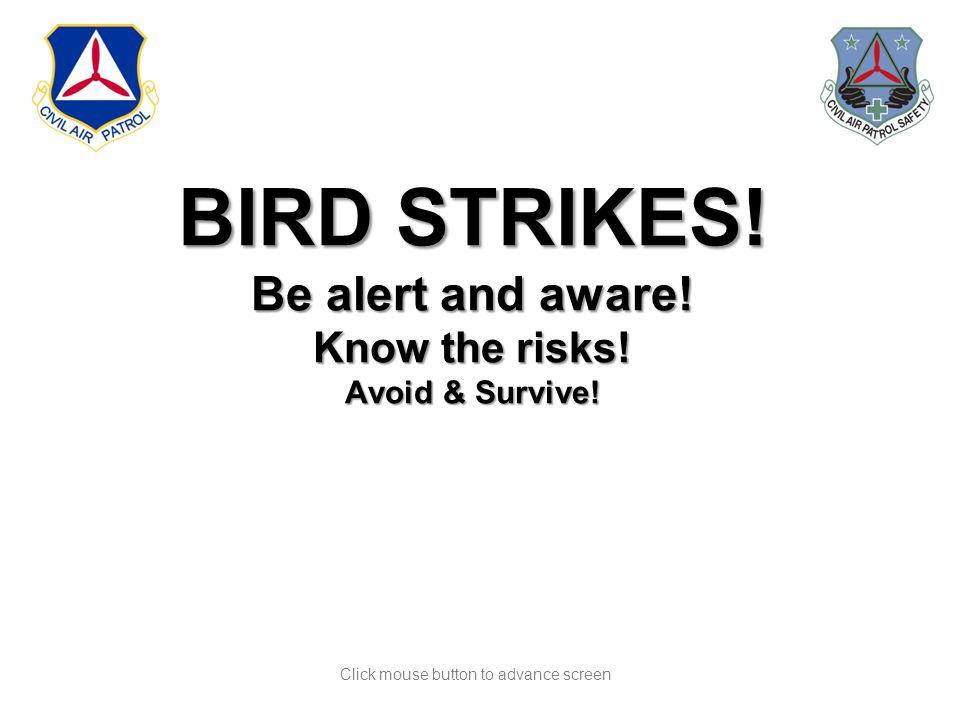 Click mouse button to advance screen BIRD STRIKES.