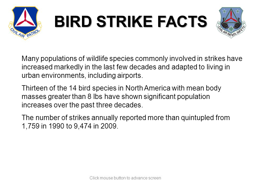 Click mouse button to advance screen Many populations of wildlife species commonly involved in strikes have increased markedly in the last few decades and adapted to living in urban environments, including airports.