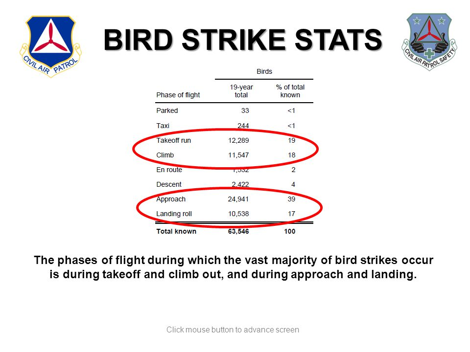 Click mouse button to advance screen BIRD STRIKE STATS The phases of flight during which the vast majority of bird strikes occur is during takeoff and climb out, and during approach and landing.