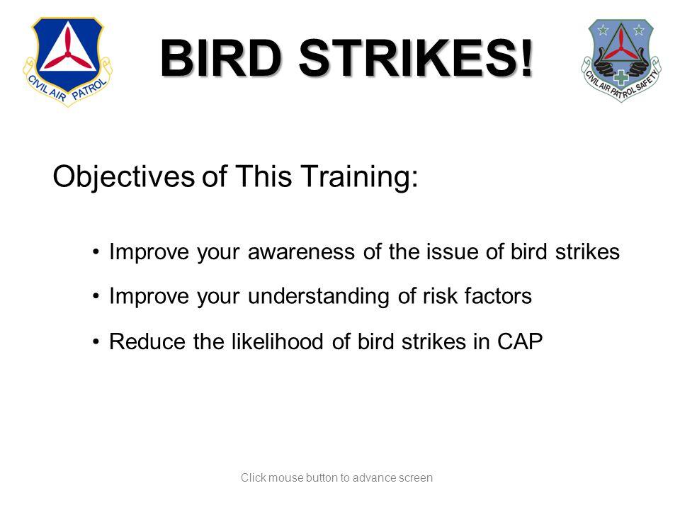 BIRD STRIKES. BIRD STRIKES.