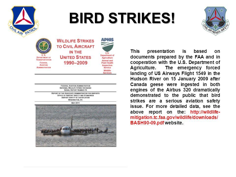 BIRD STRIKES.
