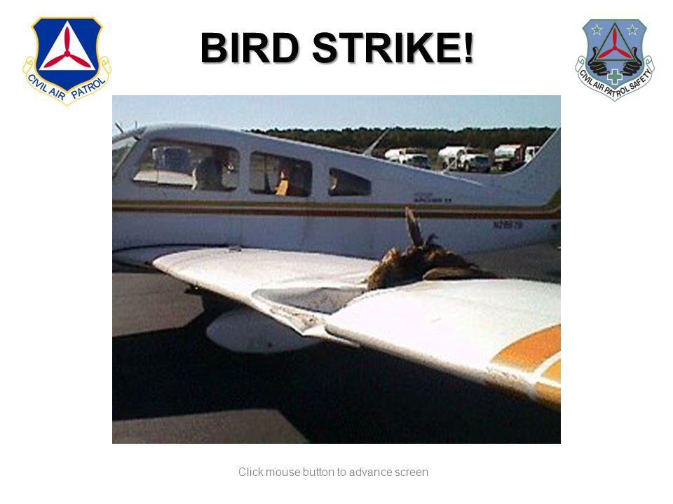Click mouse button to advance screen BIRD STRIKE!
