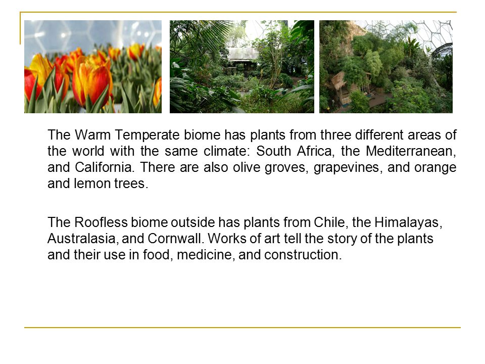The Warm Temperate biome has plants from three different areas of the world with the same climate: South Africa, the Mediterranean, and California.