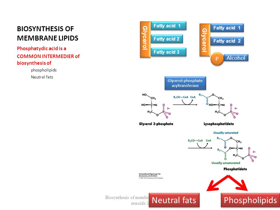 Steps of cholesterol biosynthesis III Mevalonic acid + ATP  5-pyrophospho-mevalonate 5-pyrophospho-mevalonate  decarboxylation + active isoprenoid unit Biosynthesis of membrane lipids and steroids 1 33 Prenylated proteins, ubiquinon, heme,