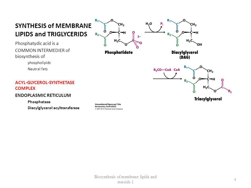 SYNTHESIS OF MEMBRANE LIPIDS BIOSYNTHESIS OF PHOSPHOLIPIDS ACTIVATION OF PHOSPHATIDIC ACID / ALCOHOL Biosynthesis of membrane lipids and steroids 1 5
