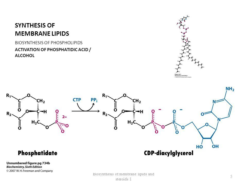 SYNTHESIS OF PHOSPHATIDYLINOSITOL 4,5 BISPHOSPHATE CDP-diacylglycerol Phosphatidyl-inositol 4,5 bisphosphate Biosynthesis of membrane lipids and steroids 1 6 Phospholipase C