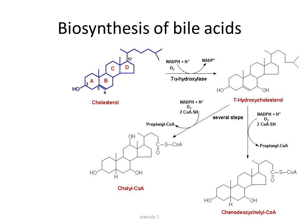 Biosynthesis of bile acids Biosynthesis of membrane lipids and steroids 1 52