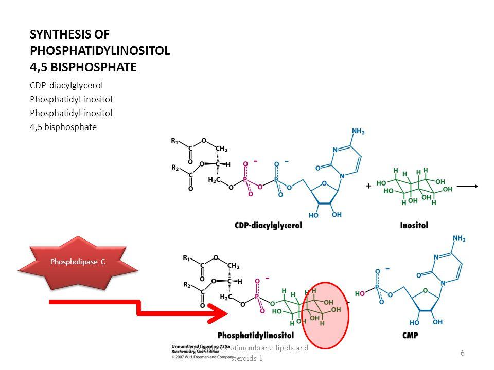 Galactosyl – ceramide / Galactocerebroside Biosynthesis of membrane lipids and steroids 1 17 Ceramid Gal Monohexoside GalGal DihexozidCeramid