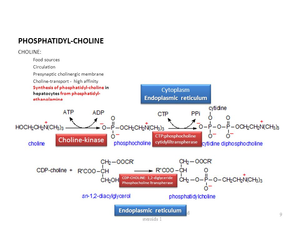 PHOSPHATIDYL-CHOLINE CHOLINE: Food sources Circulation Presynaptic cholinergic membrane Choline-transport - high affinity Synthesis of phosphatidyl-choline in hepatocytes from phosphatidyl- ethanolamine Biosynthesis of membrane lipids and steroids 1 9 Choline-kinase CTP:phosphocholine cytidyliltranspherase CTP:phosphocholine cytidyliltranspherase Cytoplasm Endoplasmic reticulum Cytoplasm Endoplasmic reticulum CDP-CHOLINE: 1,2-diglyceride Phosphocholine ltranspherase CDP-CHOLINE: 1,2-diglyceride Phosphocholine ltranspherase