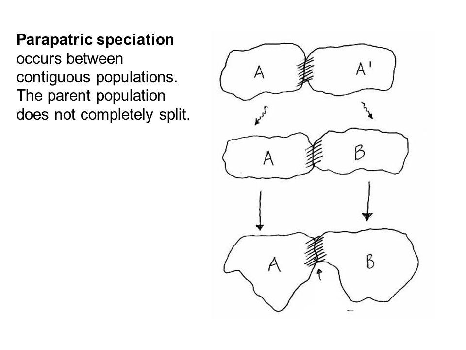 Parapatric speciation occurs between contiguous populations.