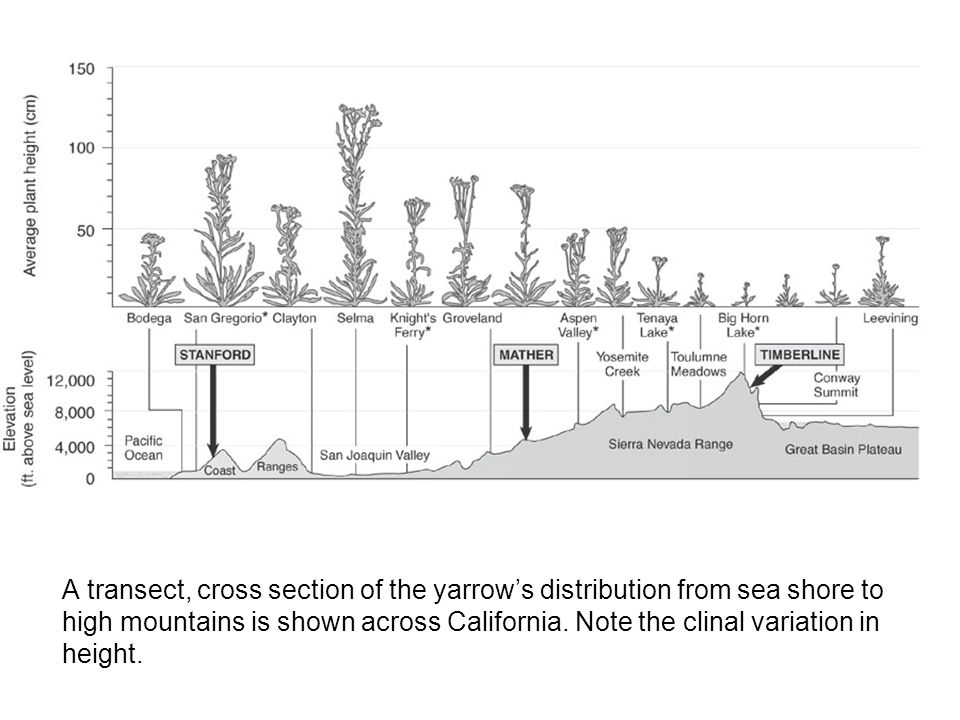  A transect, cross section of the yarrow's distribution from sea shore to high mountains is shown across California.