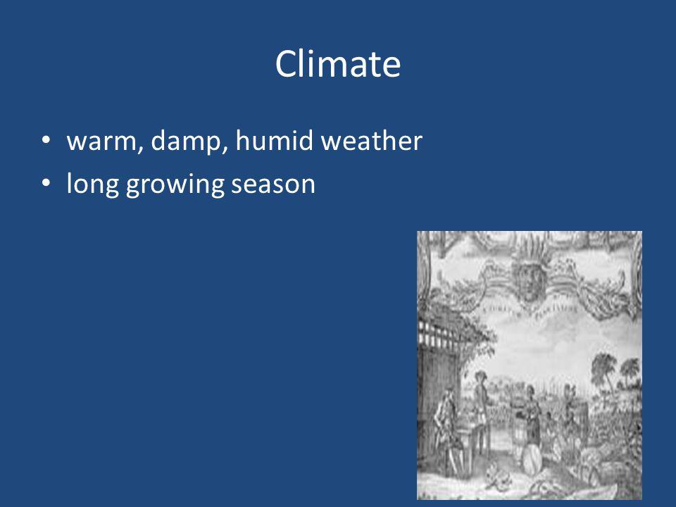 Climate warm, damp, humid weather long growing season