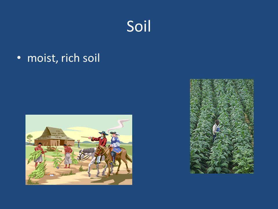Soil moist, rich soil