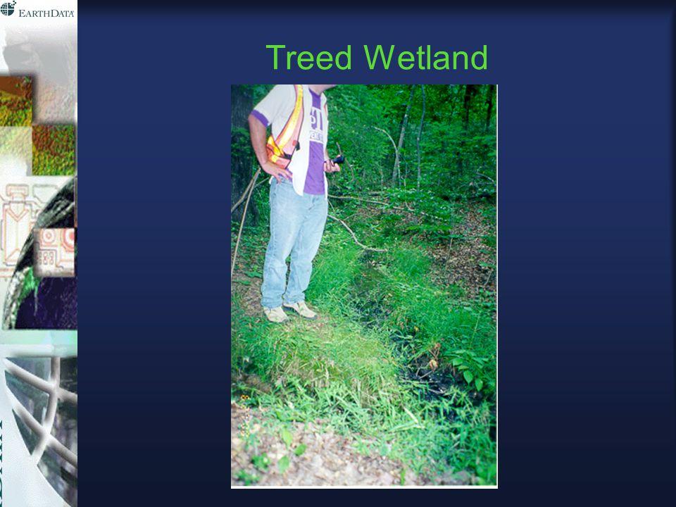 Treed Wetland