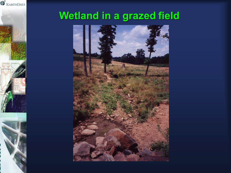 Wetland in a grazed field