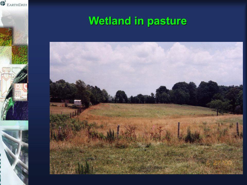 Wetland in pasture