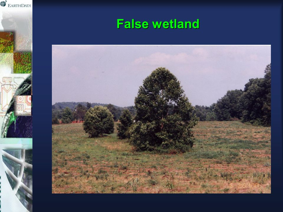 False wetland