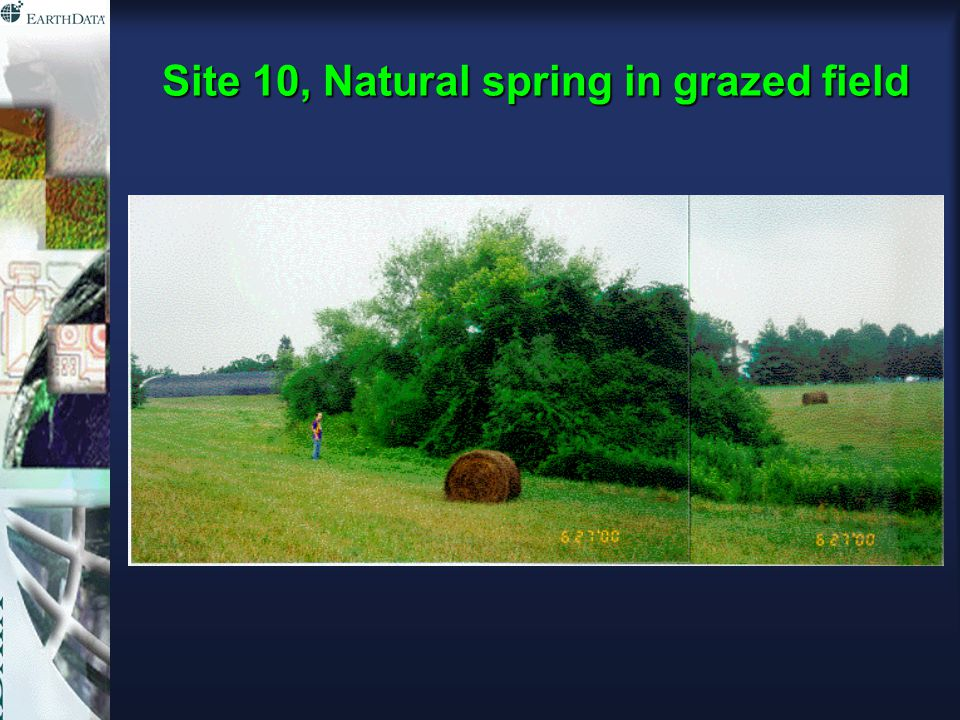 Site 10, Natural spring in grazed field