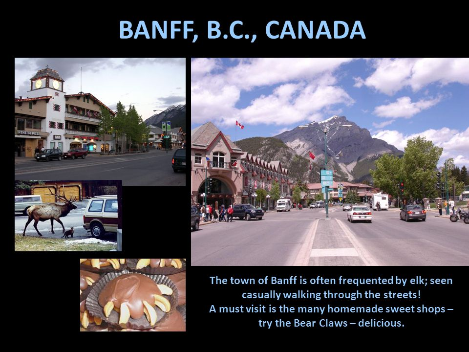 BANFF, B.C., CANADA The town of Banff is often frequented by elk; seen casually walking through the streets.