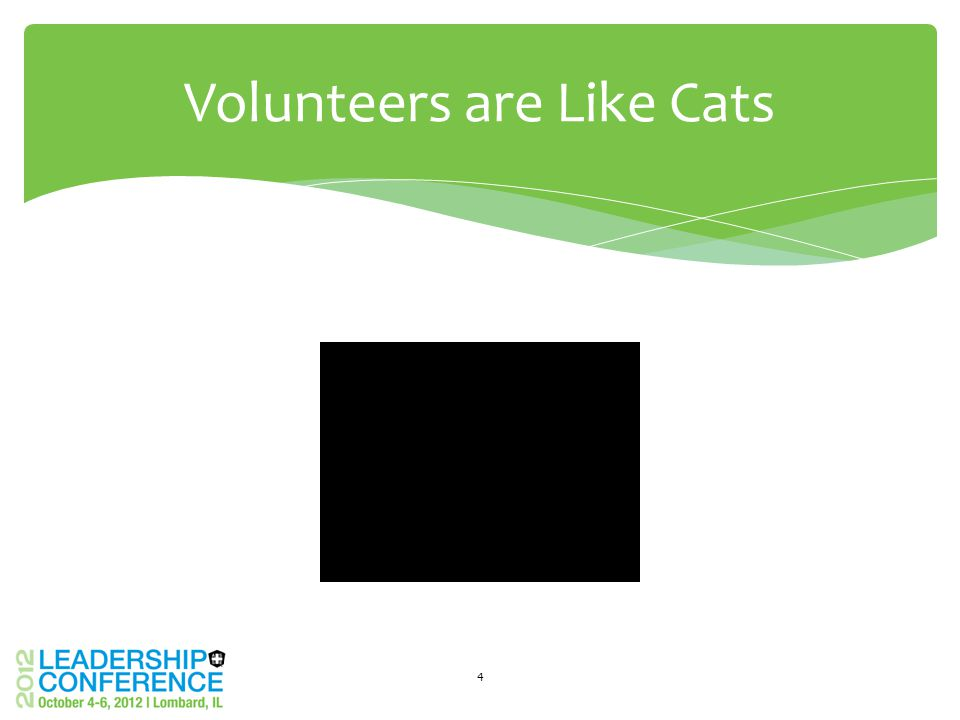 4 Volunteers are Like Cats