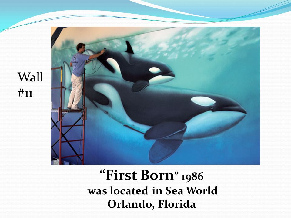 First Born 1986 was located in Sea World Orlando, Florida Wall #11