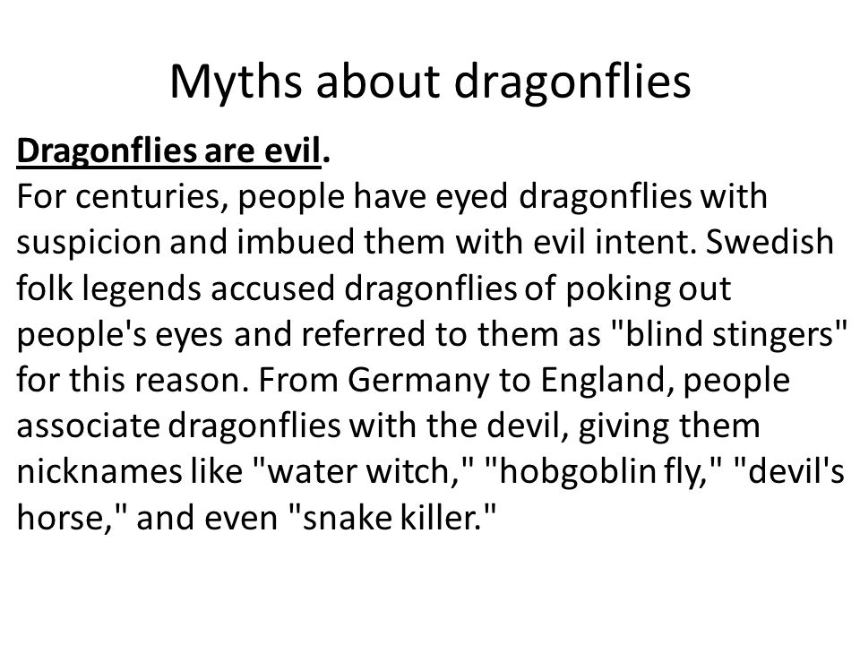 Myths about dragonflies Dragonflies are evil.