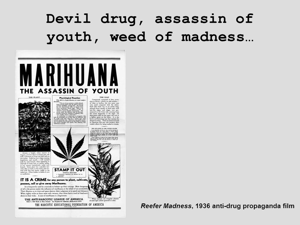 Devil drug, assassin of youth, weed of madness… Reefer Madness, 1936 anti-drug propaganda film
