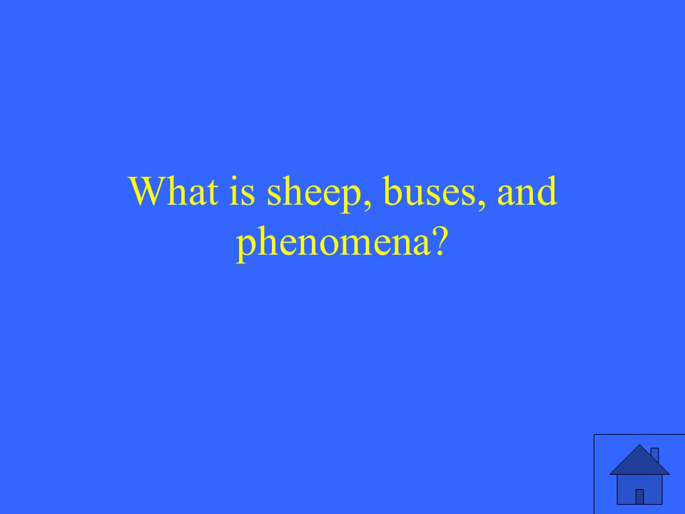 What is sheep, buses, and phenomena