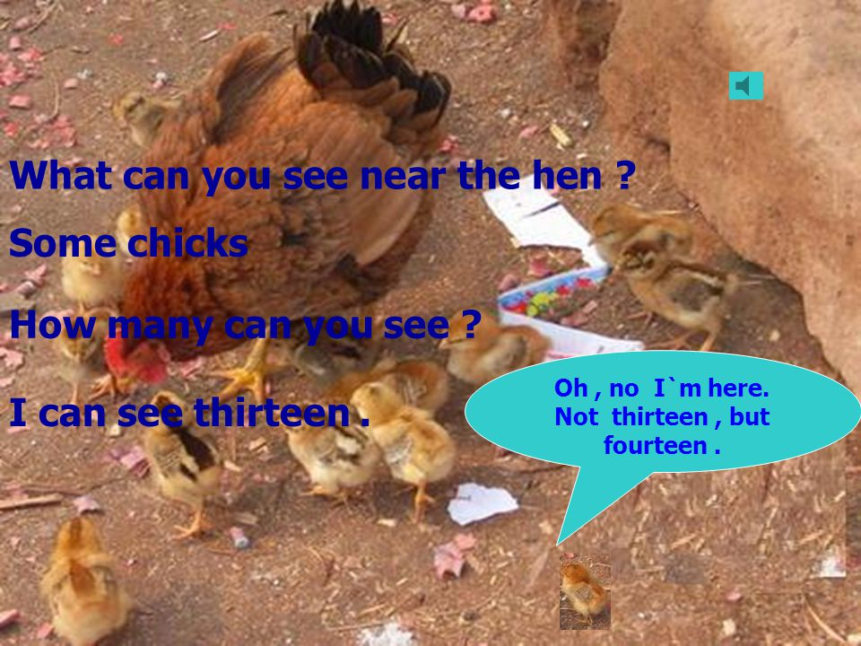 Oh, no I`m here. Not thirteen, but fourteen. What can you see near the hen .