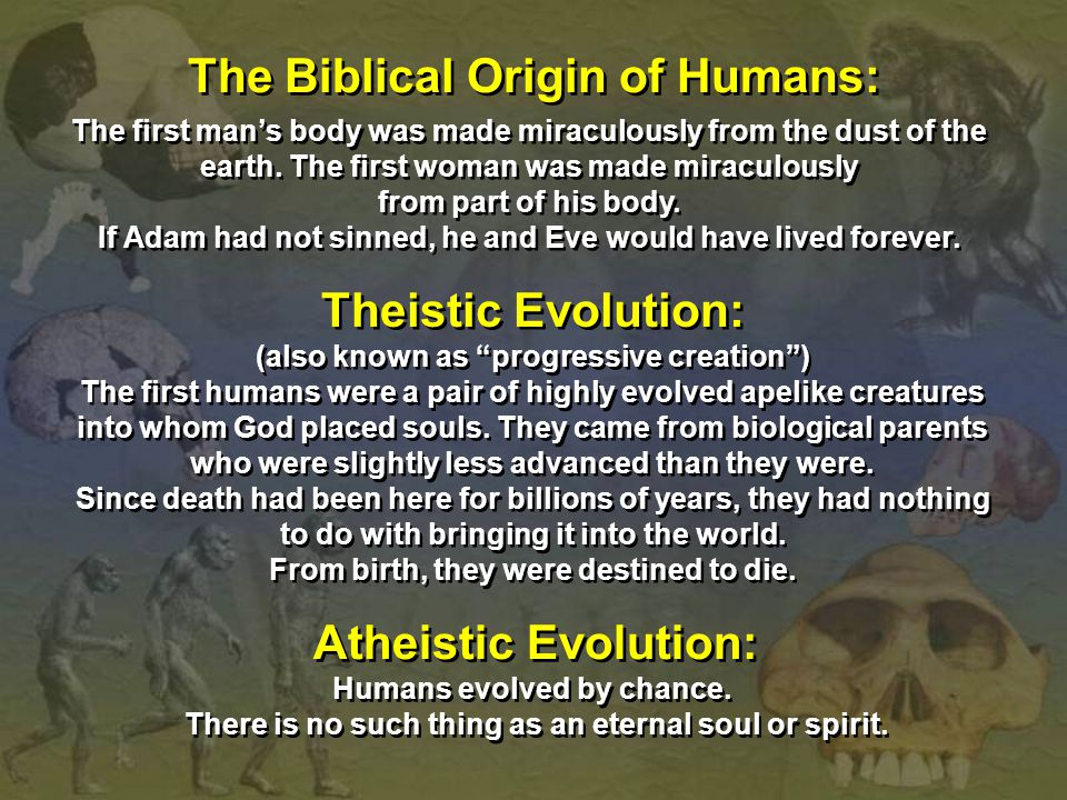 "The Biblical Origin of Humans: Theistic Evolution: (also known as ""progressive creation"") The first humans were a pair of highly evolved apelike creat"