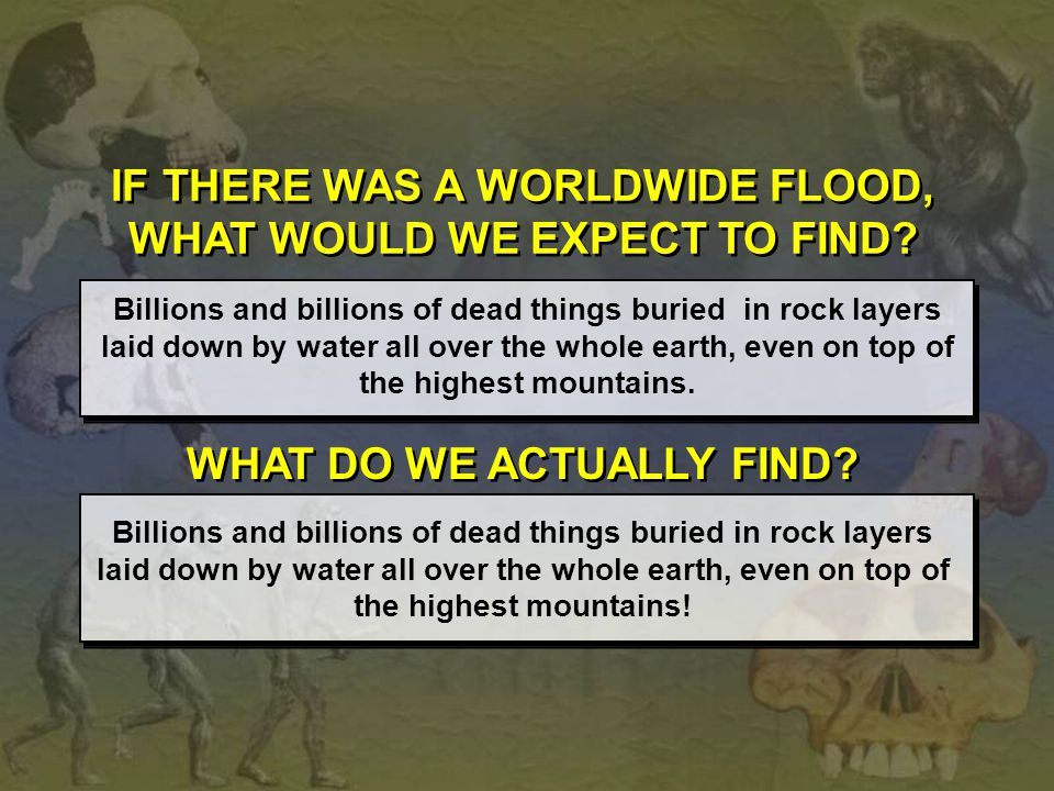 IF THERE WAS A WORLDWIDE FLOOD, WHAT WOULD WE EXPECT TO FIND? Billions and billions of dead things buried in rock layers laid down by water all over t
