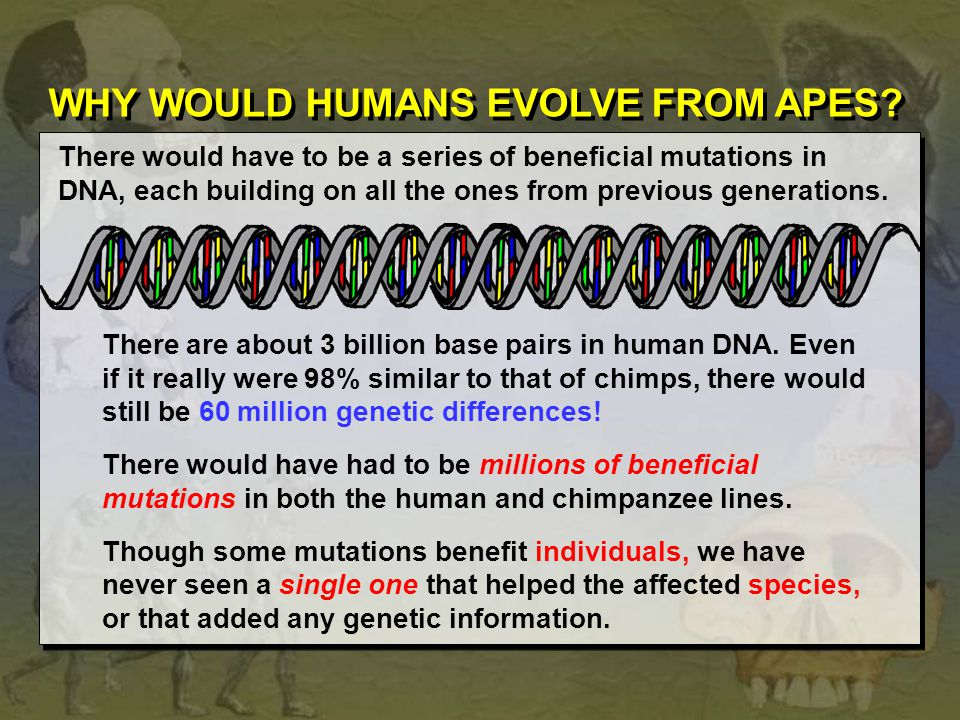 WHY WOULD HUMANS EVOLVE FROM APES? There would have to be a series of beneficial mutations in DNA, each building on all the ones from previous generat