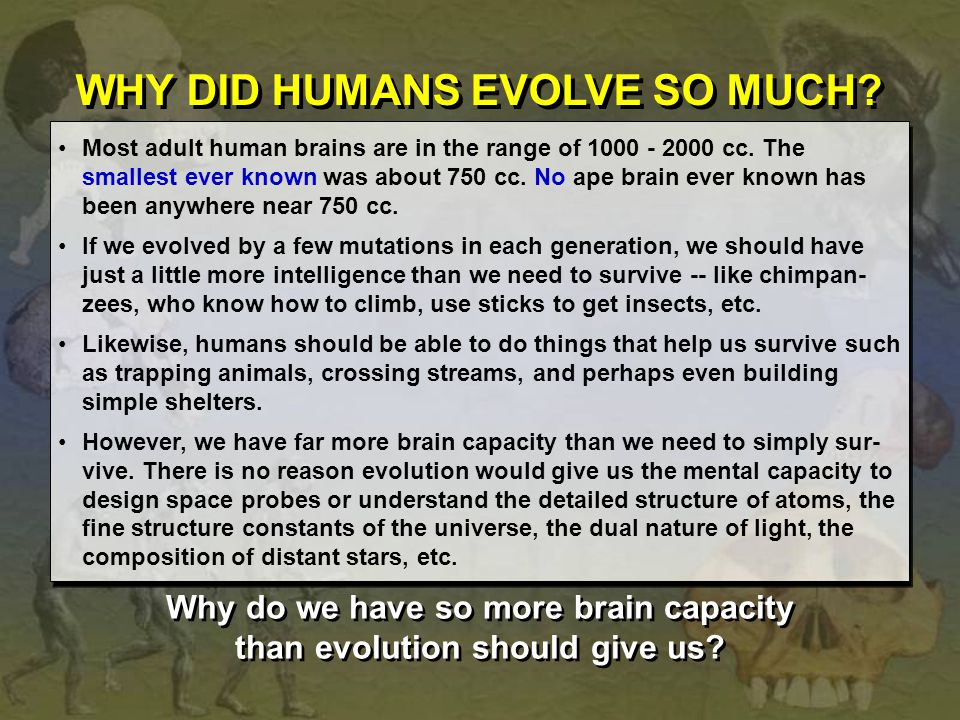 WHY DID HUMANS EVOLVE SO MUCH? Most adult human brains are in the range of 1000 - 2000 cc. The smallest ever known was about 750 cc. No ape brain ever