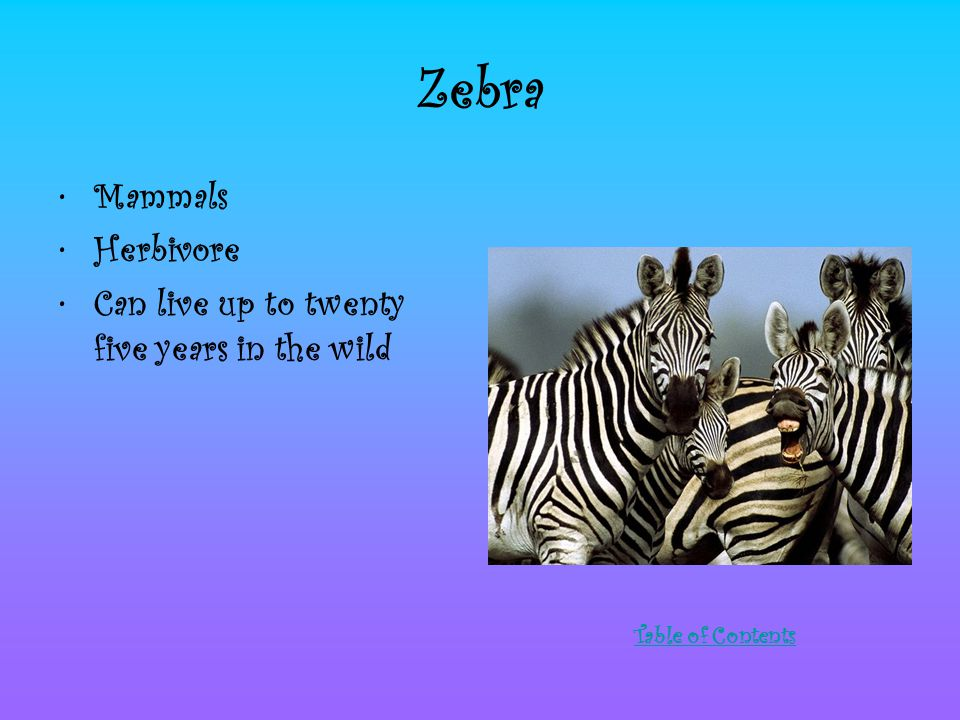 Zebra Mammals Herbivore Can live up to twenty five years in the wild Table of Contents
