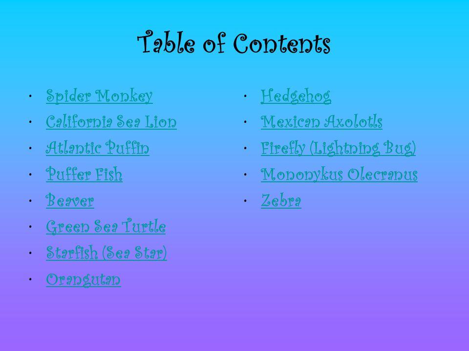 Table of Contents Spider Monkey California Sea Lion Atlantic Puffin Puffer Fish Beaver Green Sea Turtle Starfish (Sea Star) Orangutan Hedgehog Mexican Axolotls Firefly (Lightning Bug) Mononykus Olecranus Zebra