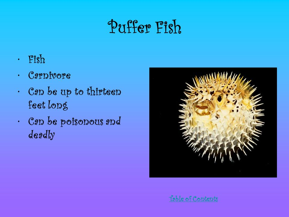 Puffer Fish Fish Carnivore Can be up to thirteen feet long Can be poisonous and deadly Table of Contents
