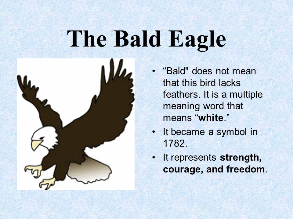 "The Bald Eagle ""Bald"