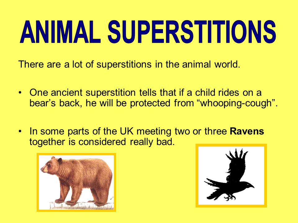 There are a lot of superstitions in the animal world. One ancient superstition tells that if a child rides on a bear's back, he will be protected from