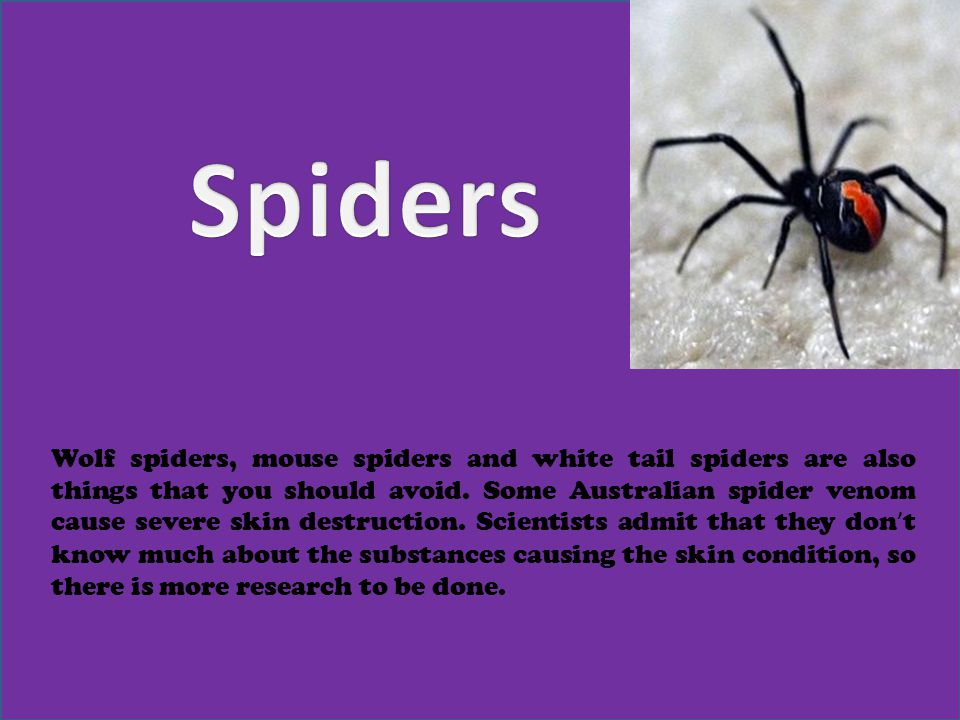 Wolf spiders, mouse spiders and white tail spiders are also things that you should avoid.