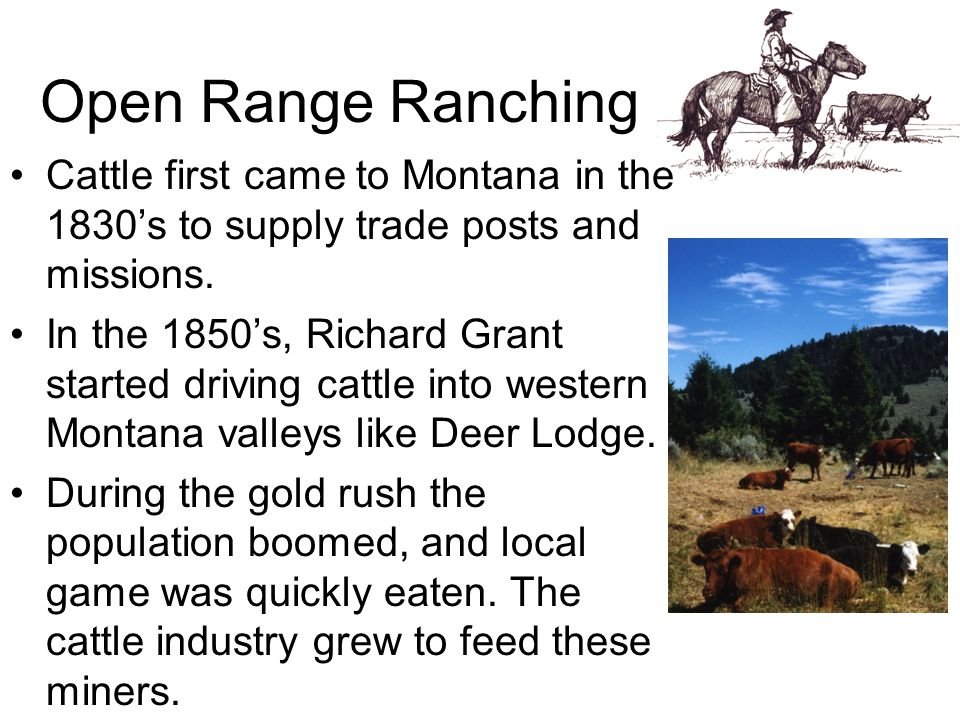 Open Range Ranching Cattle first came to Montana in the 1830's to supply trade posts and missions.