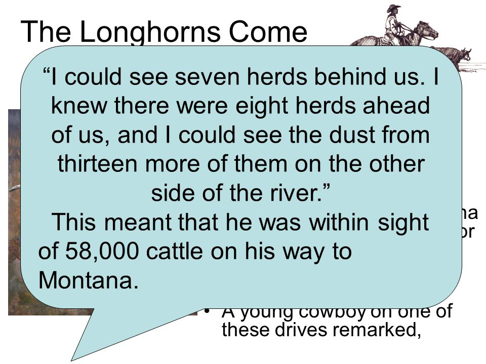 The Longhorns Come North At first, most of Montana's cattle were Hereford and Angus (shorthorns.) But in 1866 Montana received its first Texas longhorn cattle drive.