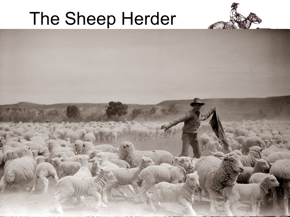 The Sheep Herder The sheepherder led a different life than the cowboy, often spending months alone with only his dog.